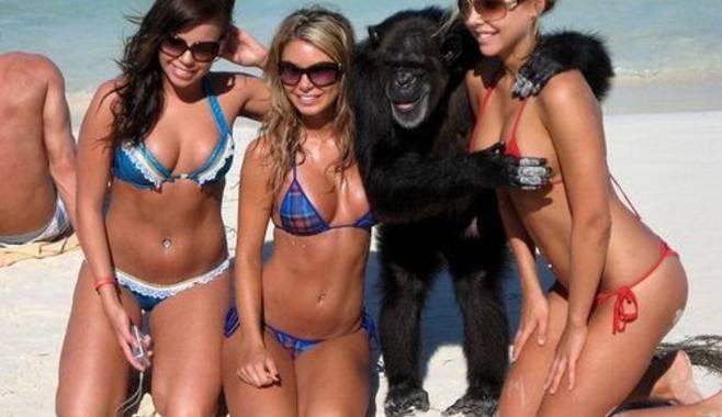 Отличительные особенности нового игрового автомата Crazy Monkey