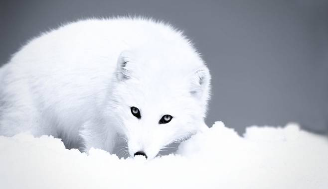 Основные правила игры в эмуляторе игрового аппарата Polar Fox